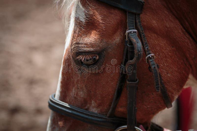 Крупный план лошади стоковая фотография rf