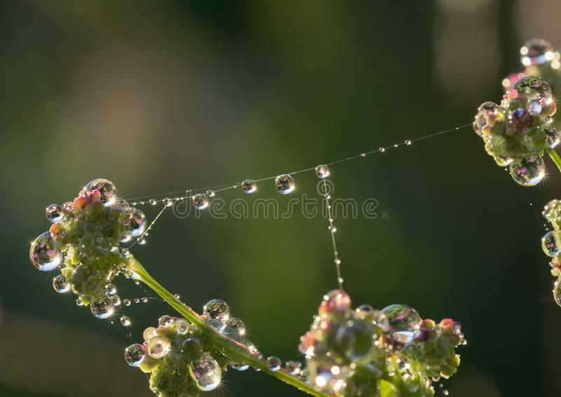 Крупный план падений росы на сети паука стоковое фото