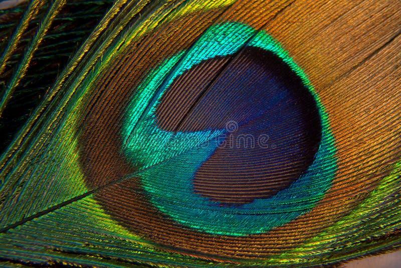 Крупный план пера павлина стоковые фотографии rf