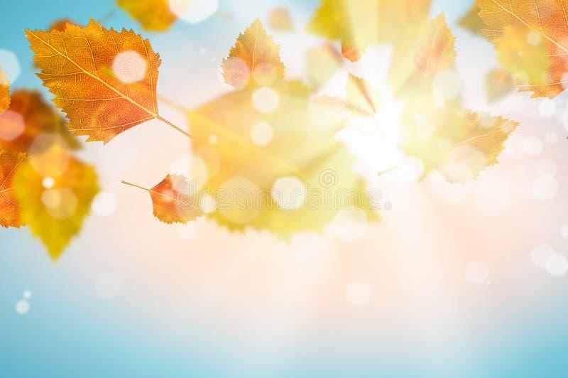 Download крупный план предпосылки осени красит красный цвет листьев плюща померанцовый Стоковое Изображение - изображение насчитывающей environmental, automobiled: 41650417
