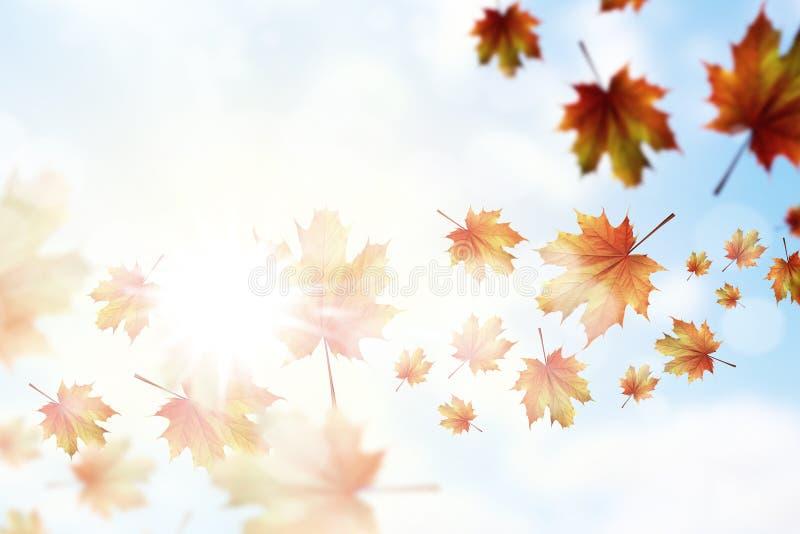 Download крупный план предпосылки осени красит красный цвет листьев плюща померанцовый Стоковое Изображение - изображение насчитывающей органическо, конспектов: 41650951