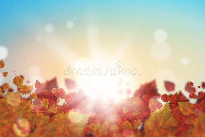 Download крупный план предпосылки осени красит красный цвет листьев плюща померанцовый Стоковое Фото - изображение насчитывающей октябрь, украшение: 41650968