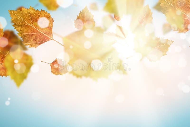 Download крупный план предпосылки осени красит красный цвет листьев плюща померанцовый Стоковое Изображение - изображение насчитывающей моргая, естественно: 41652003