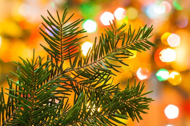 Крупный план рождественской елки окруженный светлой предпосылкой Ch стоковое изображение rf