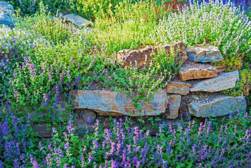 Крупный план сада Rockery стоковые фото