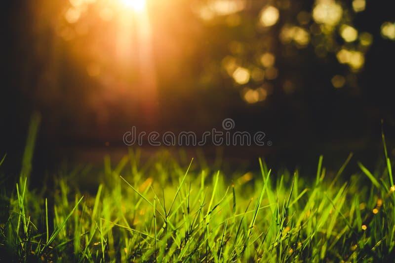 Крупный план травы в стиле вечера винтажном стоковые изображения rf