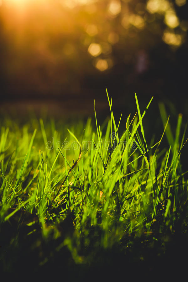 Крупный план травы в стиле вечера винтажном стоковая фотография