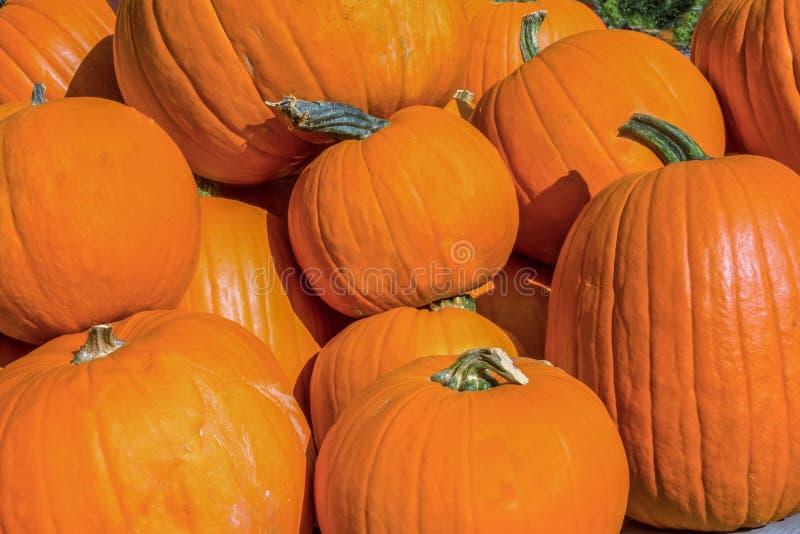 Крупный план тыкв хеллоуина стоковое фото rf