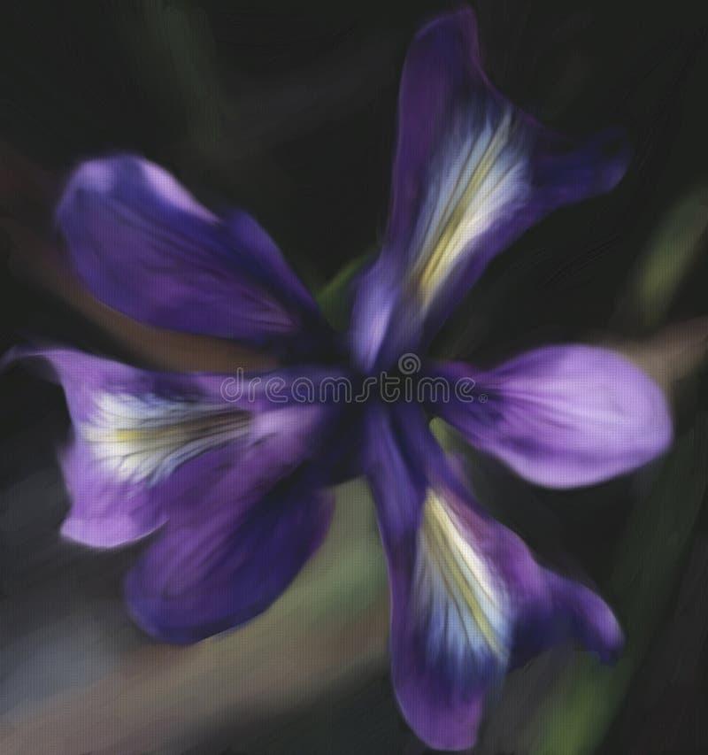 Крупный план фиолетового цветка радужки стоковое фото rf