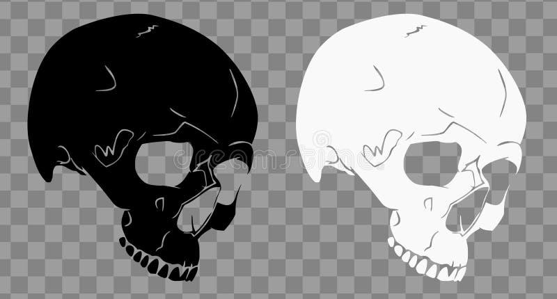 Крутая иллюстрация вектора черепов SVG бесплатная иллюстрация