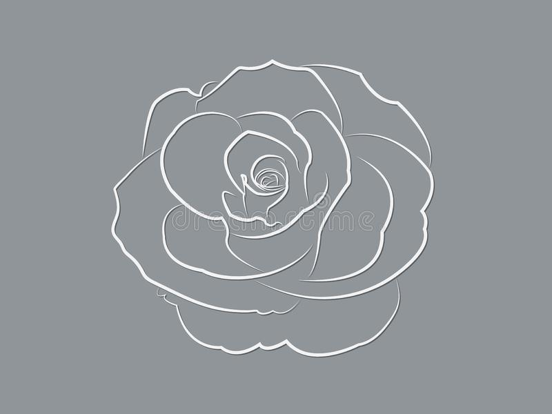 Крутой дизайн цветка белой розы зацветающ настолько красивый с линиями на темной предпосылке иллюстрация вектора