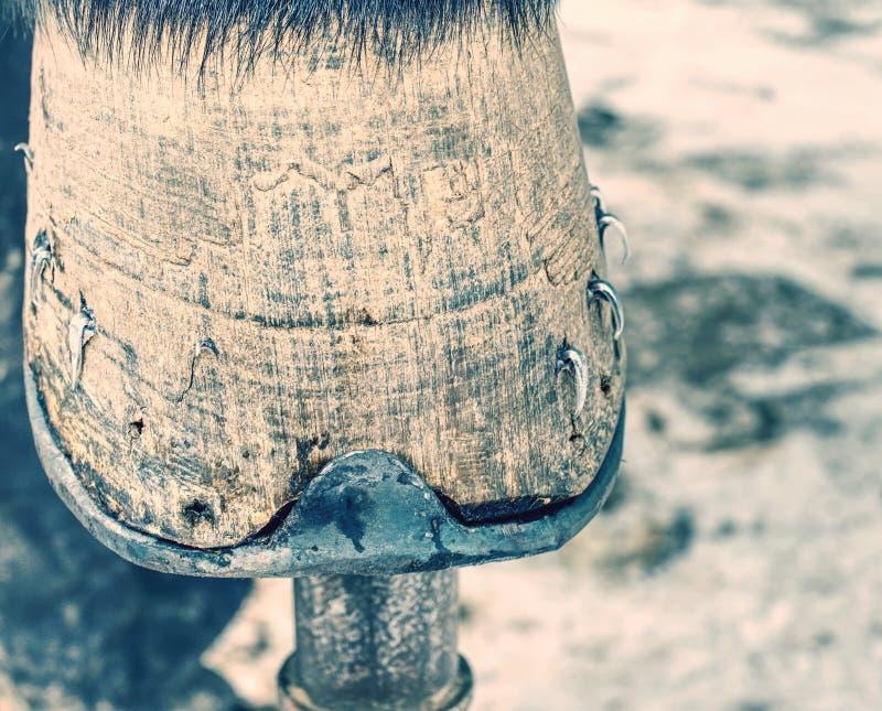Крылатая стальная ногти и кератин на копыте стоковое фото rf