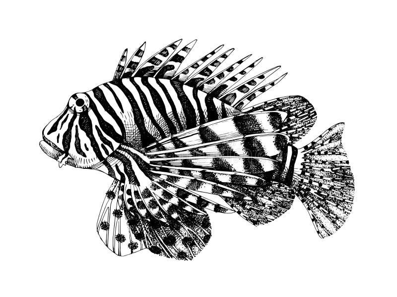 Крылатка-зебра нарисованная рукой бесплатная иллюстрация