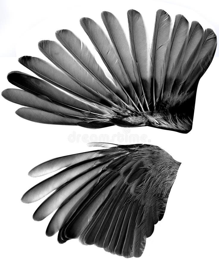 крыла стоковое фото rf