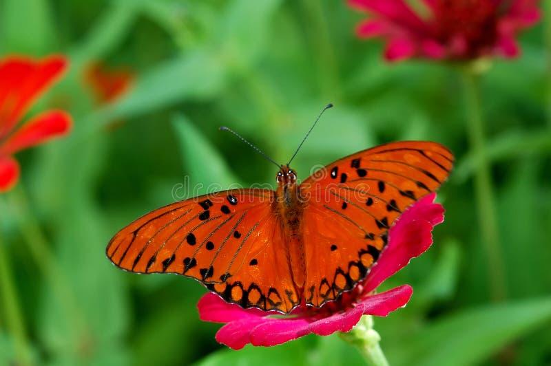 Download крыла стоковое фото. изображение насчитывающей обои, сад - 600514
