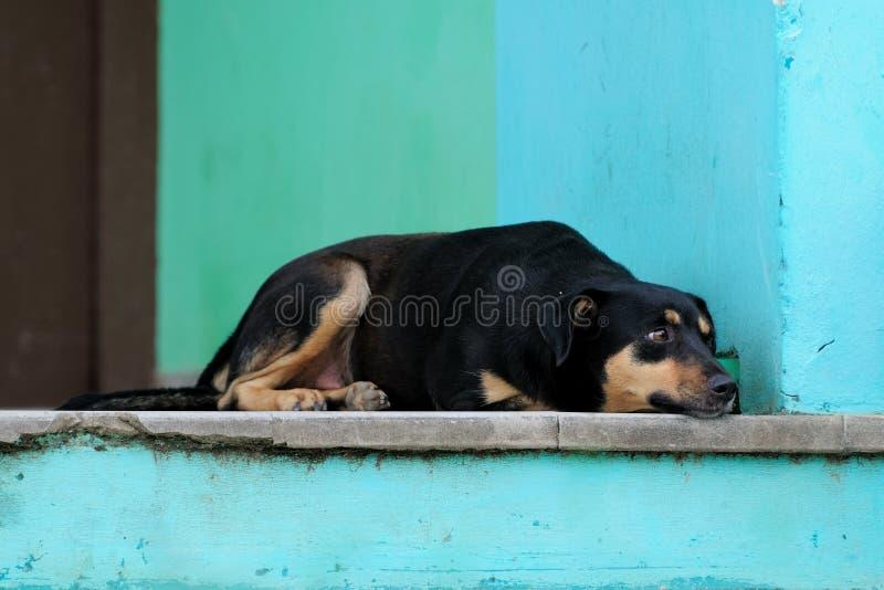 крылечко varadero собаки стоковые изображения rf