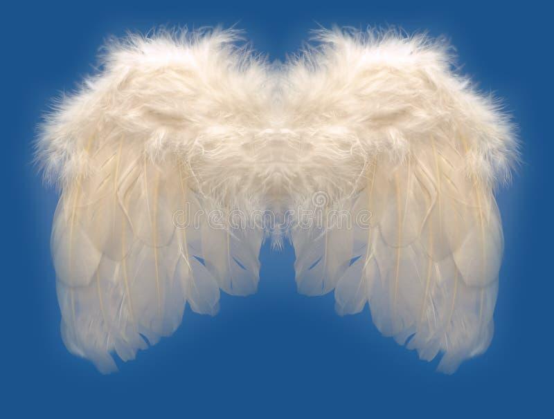 крыло ангелов стоковые изображения rf