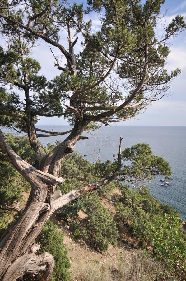 Крымские ландшафты стоковое фото rf