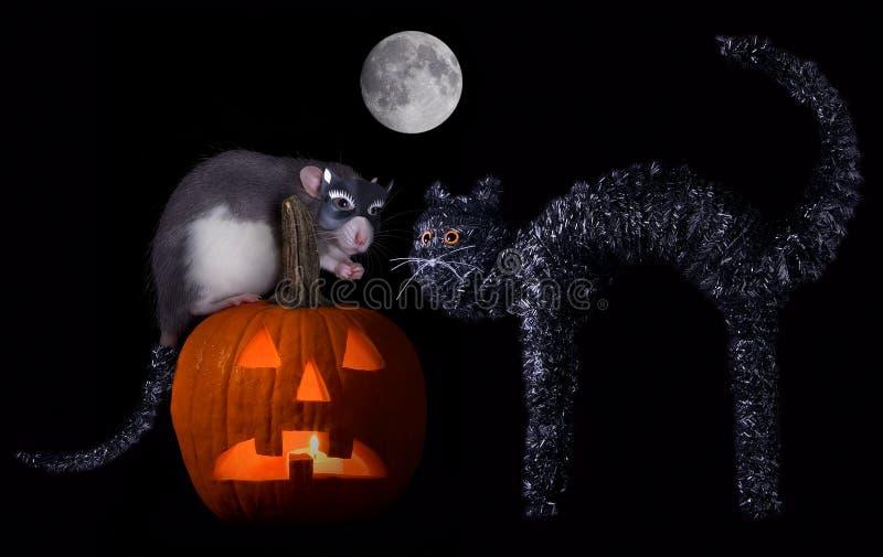 крыса halloween кота стоковые фотографии rf
