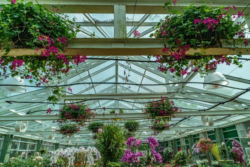 Крыша зеленого дома стоковые изображения rf