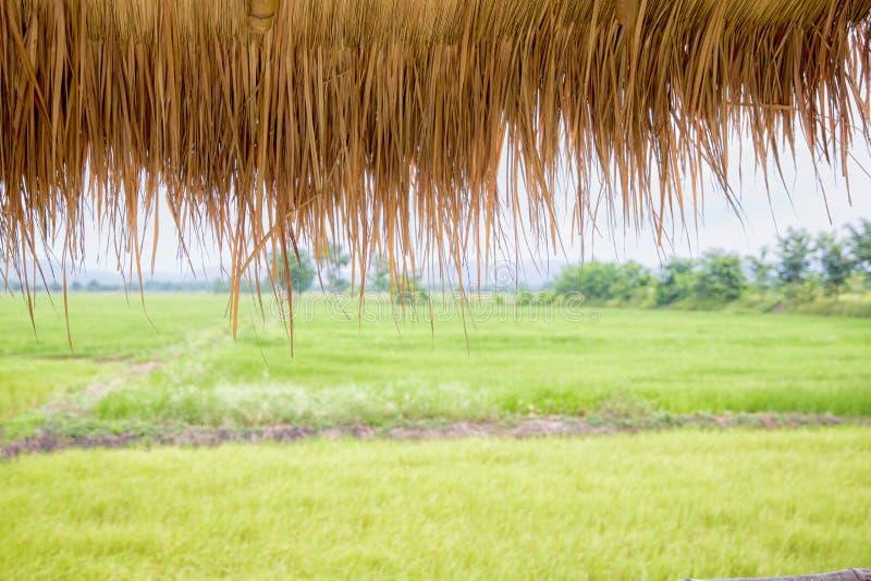 крыша травы коттеджа с видеть зеленую предпосылку поля неочищенных рисов пейзаж видит взгляд от сельской местности ослабляя изобр стоковые изображения rf