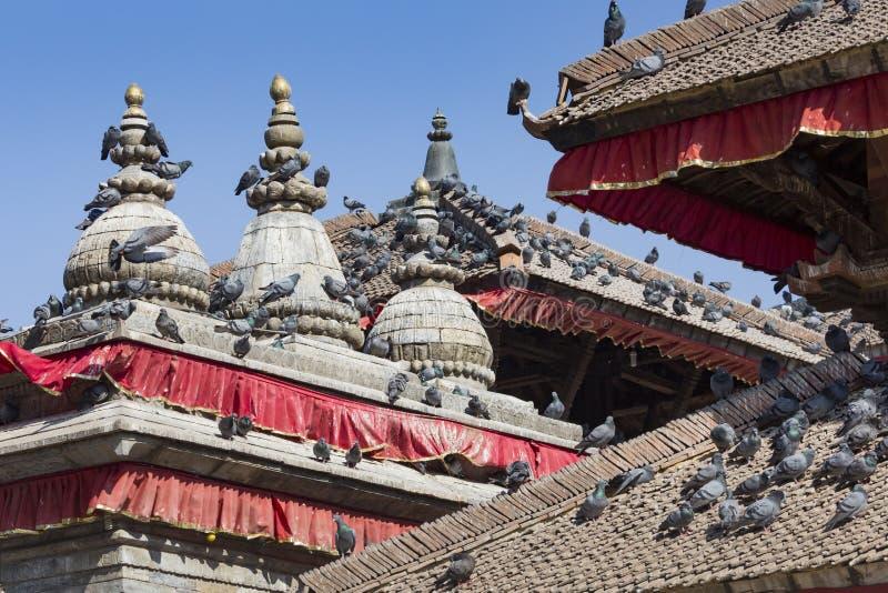 Крыши плитки с много птиц на Durbar придают квадратную форму в Khatmandu, Ne стоковые фотографии rf