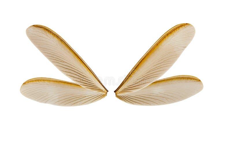Крыло термита летания стоковое изображение