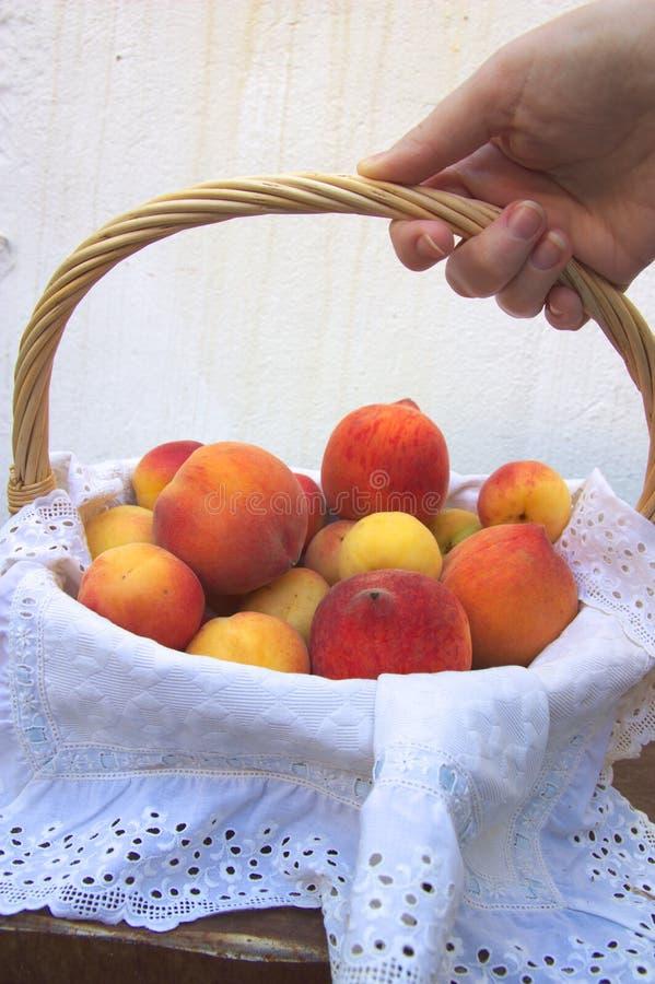 Кто-то принимает корзину вполне плодов лета стоковое фото