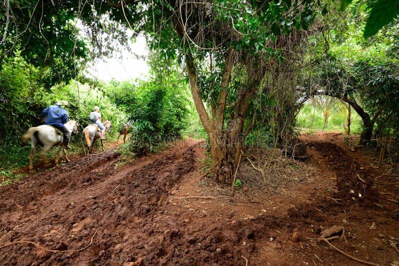 Куба, Долина de Vinales стоковое изображение