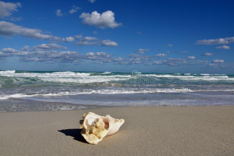 Куба, пляж стоковое фото rf
