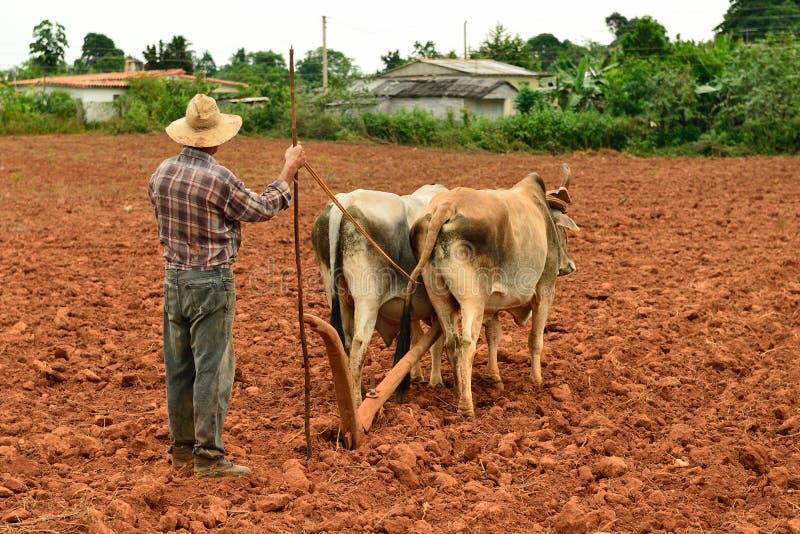 Куба, фермер в Долине de Vinales стоковое изображение rf