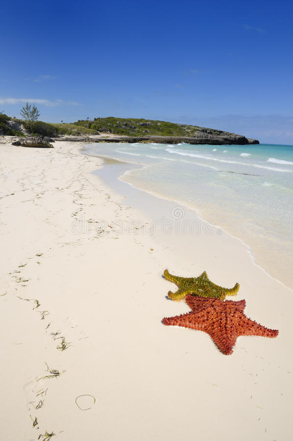 кубинец пляжа тропический стоковые фото