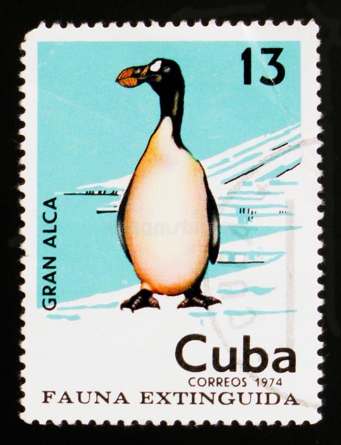 Кубинський штемпель почтового сбора показывает impennis Pinguinus большого чистиковые, потухшее serie птиц, около 1974 стоковое изображение rf