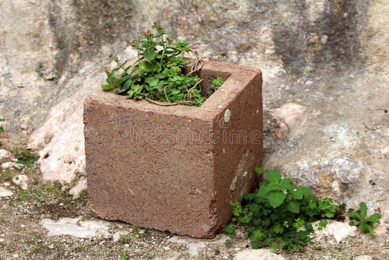 Куб Брауна конкретный как цветочный горшок с небольшими цветками окруженными с заводами и утесами стоковые фотографии rf