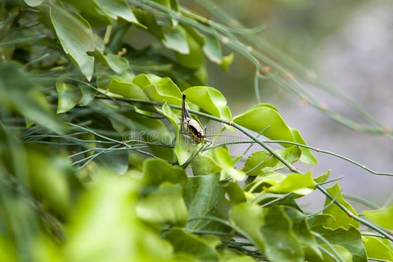 кузнечик сидя на лист в кустах стоковые фото