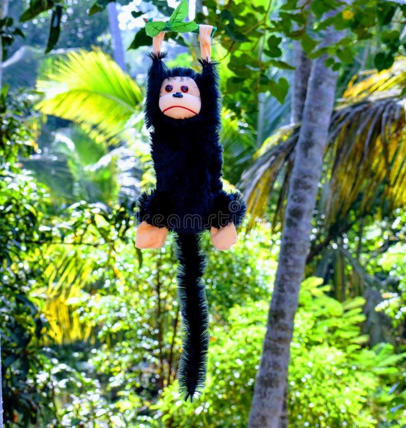 Кукла денег на дереве стоковые изображения rf