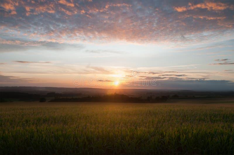 Кукурузное поле в заходе солнца стоковые фото
