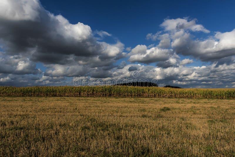 Кукурузное поле в осени под идущими облаками стоковое фото rf