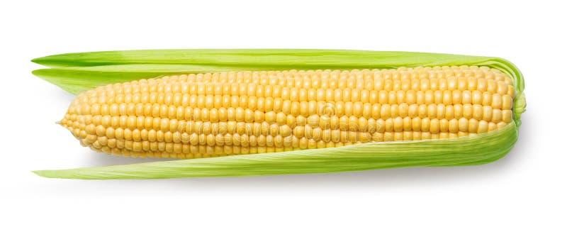 Кукурузный початок изолированный на белизне стоковое изображение rf
