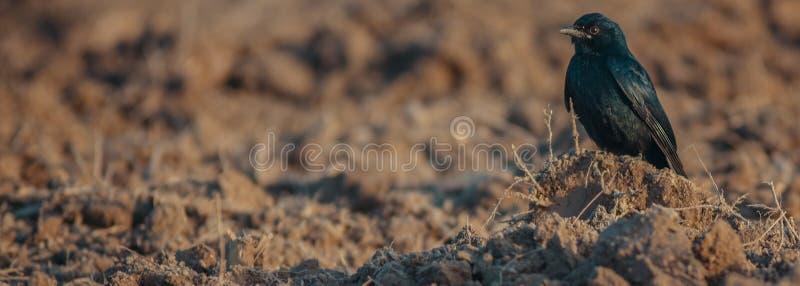 кукушк стоковое фото rf