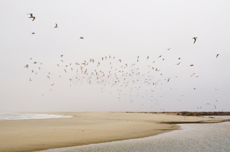 Кулига чайки стоковые фотографии rf