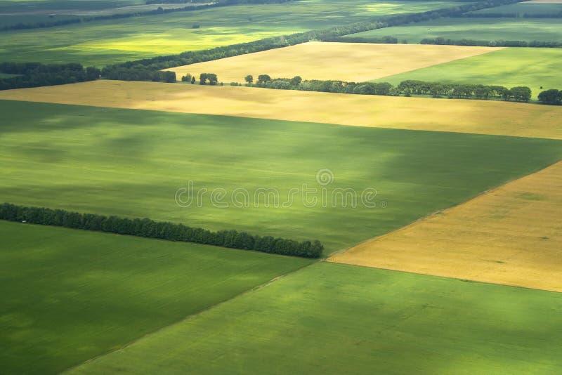 культивируемое поле фермы стоковые фото