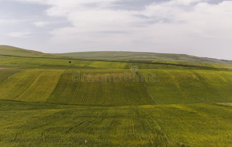 Культивируемые поля и уединённое дерево стоковое фото rf