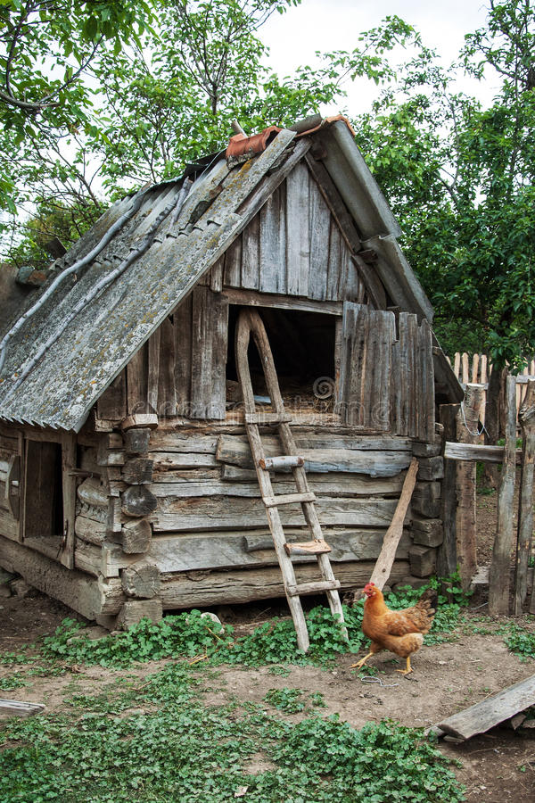 Курица и старый сеновал стоковые изображения