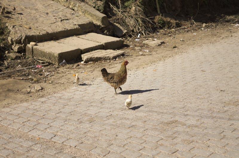 Курица и цыпленоки стоковое изображение