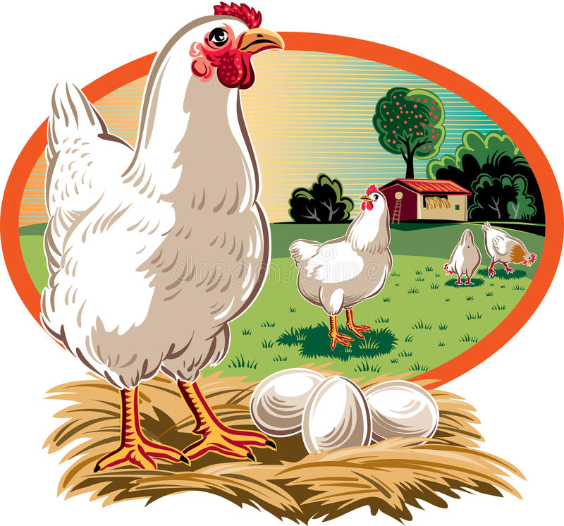Курица на гнезде с яичками иллюстрация штока