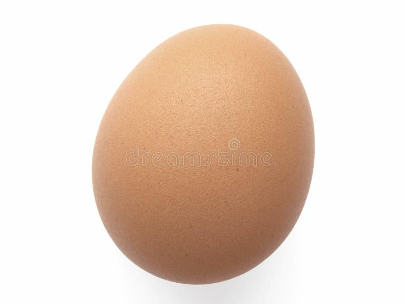 курица яичка стоковая фотография rf
