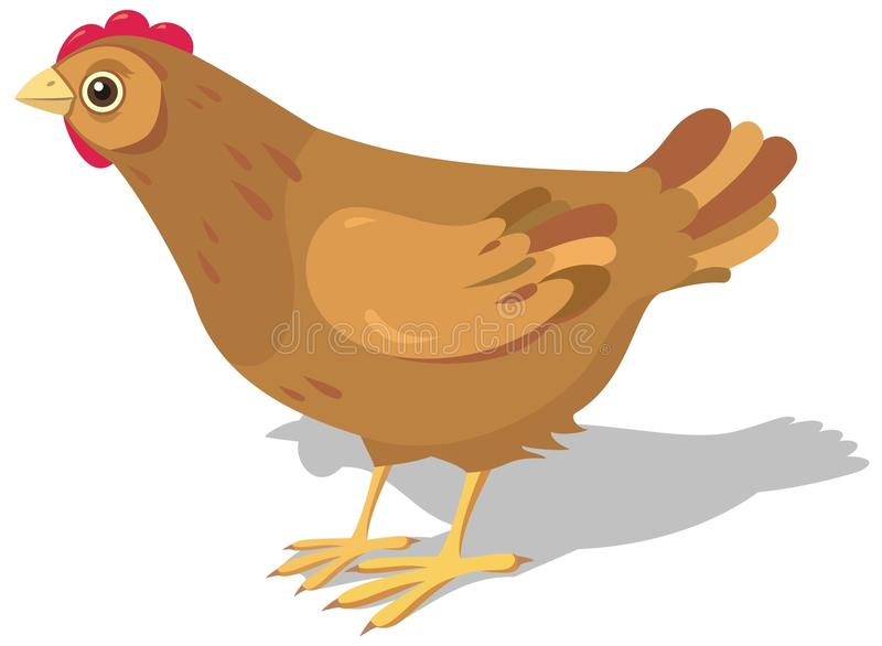 курица иллюстрация штока