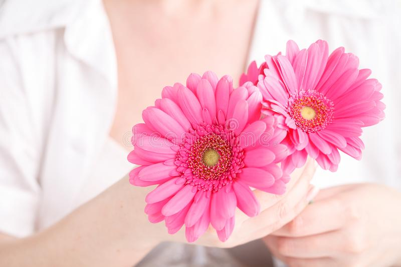 Курорт и тело заботят концепция, розовый gerbera в женской руке стоковые фотографии rf