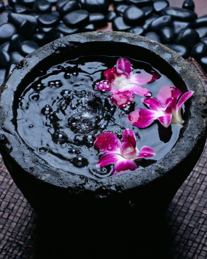 Курорт опарника с плавая орхидеей стоковое фото rf